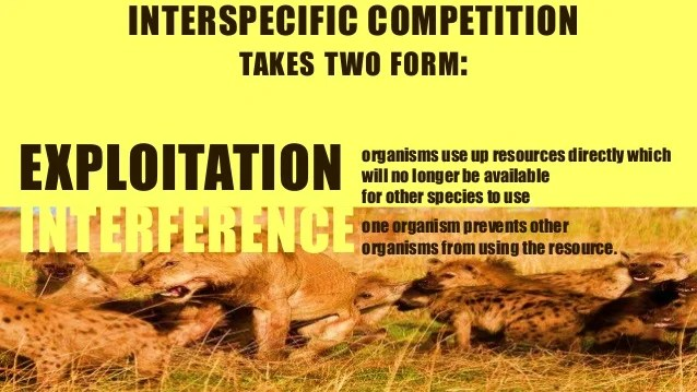 Ecology Interspecific Competition