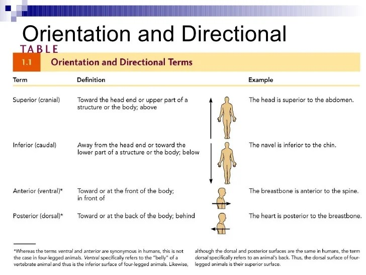 Anatomical Directional Terms Chart Homeschoolingforfree