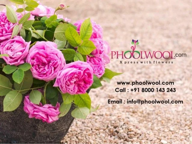 Send Flowers Cakes And Personalized Gifts Phoolwool