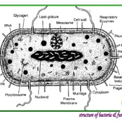 Bacteria Structure Diagram Allen Bradley Transformer Wiring Diagrams Introduction To And Function 12