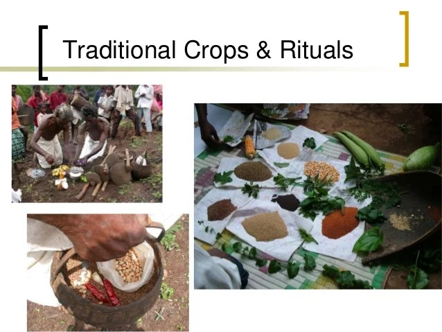 Agroecology for food and nutrition. Country experience: Nilgiri Biosp…