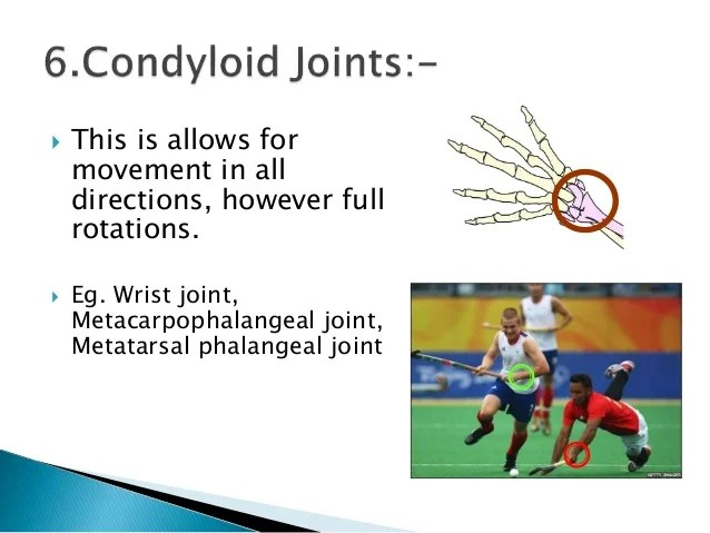 Condyloid Joint Diagram Saddle Joint