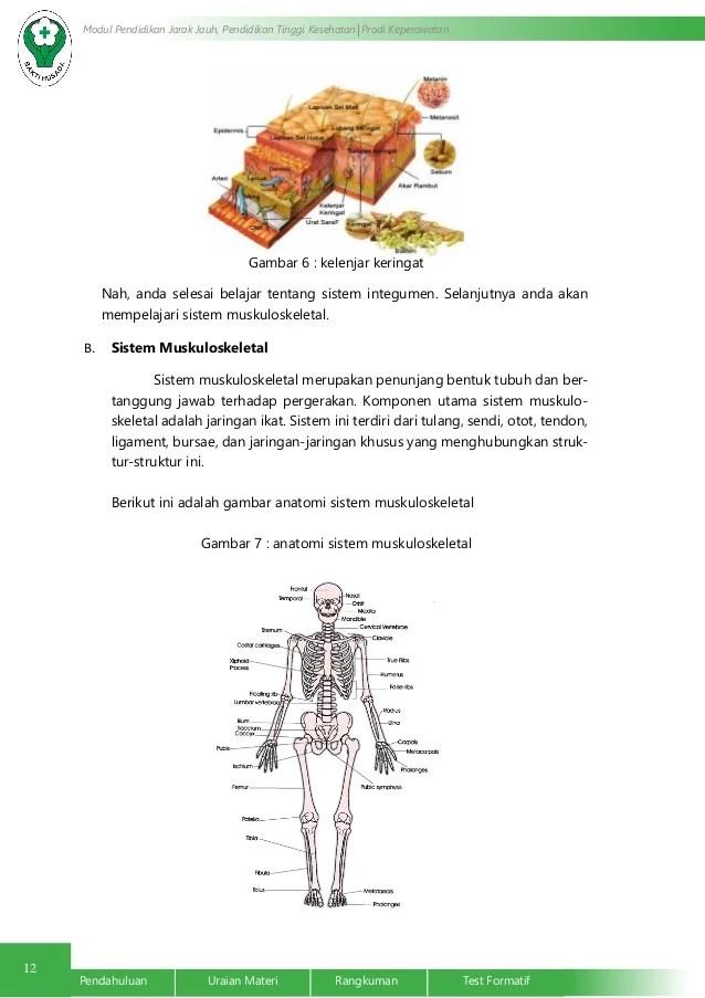 Anatomi Fisiologi Sistem Integumen dan Muskuloskeletal