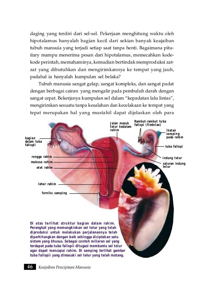 Gambar Rahim Manusia : gambar, rahim, manusia, Keajaiban, Penciptaan, Manusia1