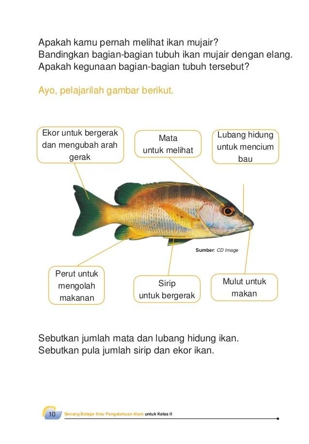Gambar Organ Pernapasan Ikan Dan Fungsinya