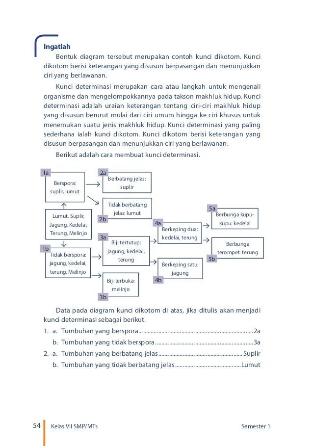 Contoh Kunci Dikotom : contoh, kunci, dikotom, Contoh, Kunci, Determinasi, Tumbuhan