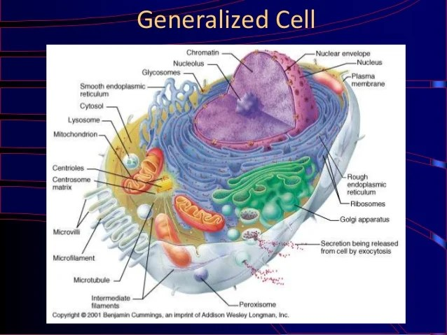 Generalized Cell Label