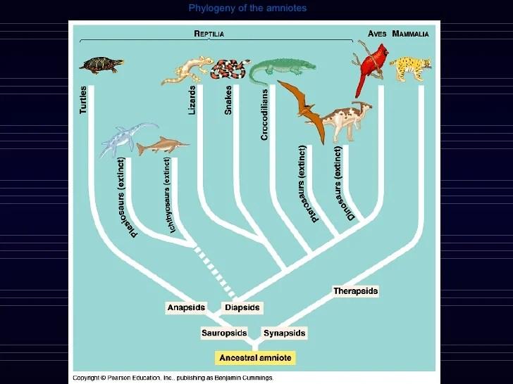 Fish Amphibian Phylogeny