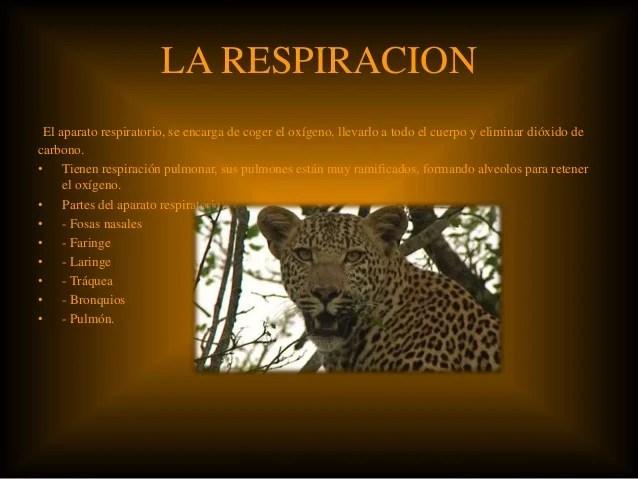 La nutricin del leopardo
