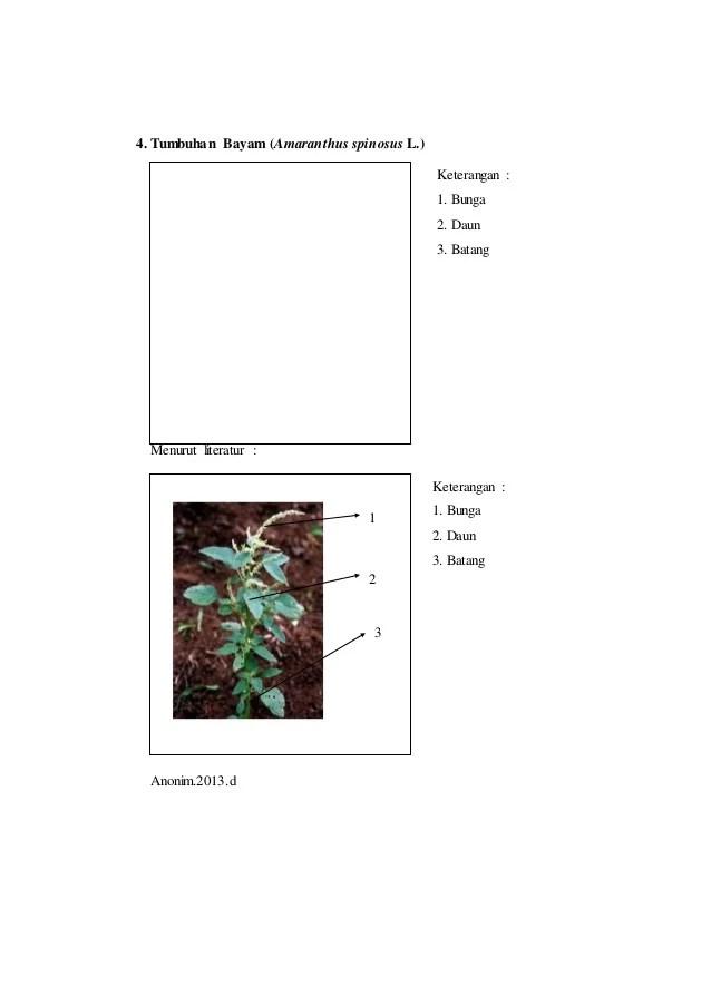 diagram batang daun