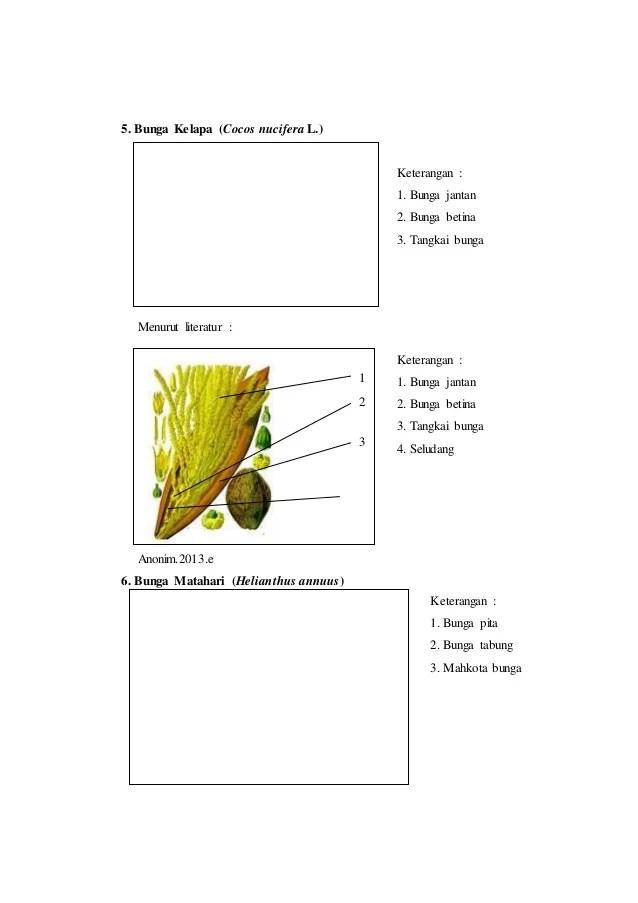 Laporan praktikum 6 bunga majemuk morfologi tumbuhan