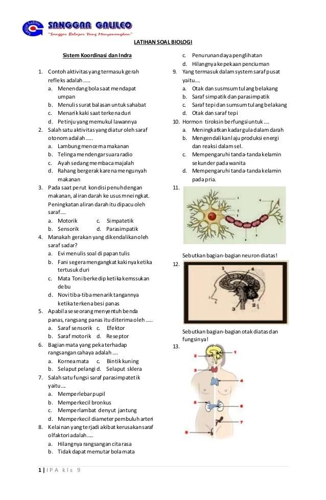Sistem Koordinasi Kelas 9 : sistem, koordinasi, kelas, Latihan, Biologi, Kelas, Risang