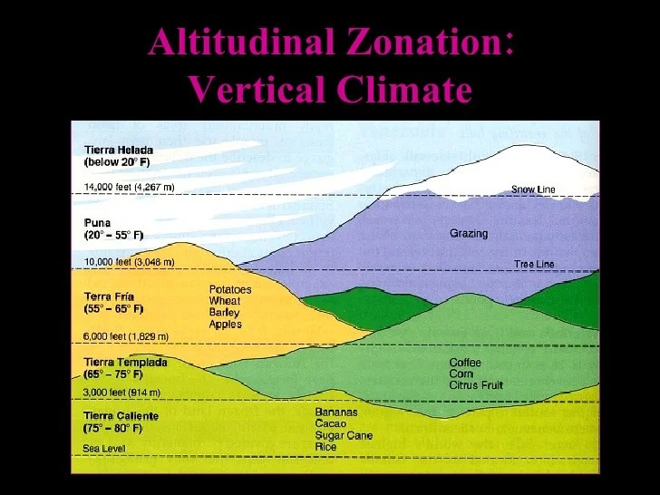 forest canopy diagram bryant furnace wiring latin american geography 1