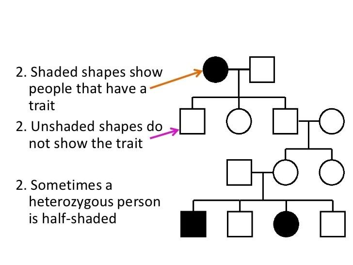 2 Pedigree Traits Chart