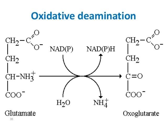 Lec 1 level 3-de (chemistry of amino acids)