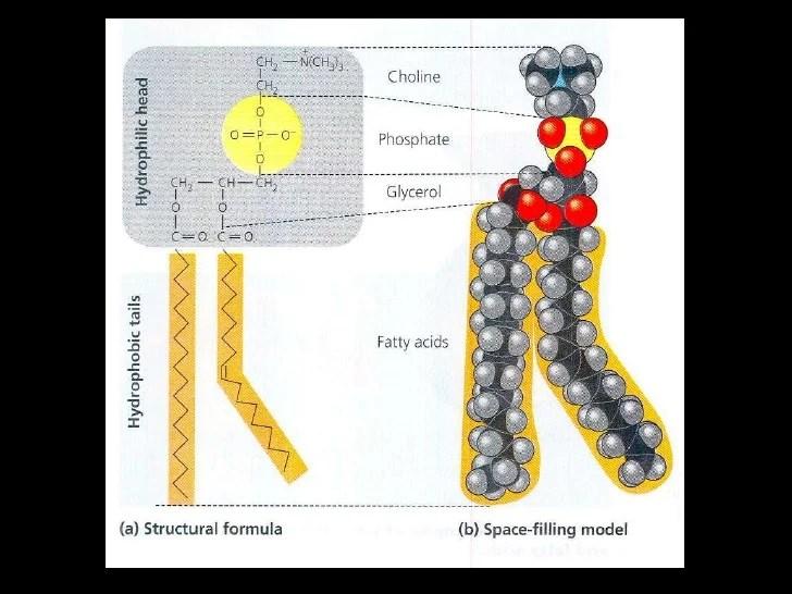 Lec18 Lipids