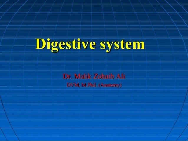 Anatomy Lecture: Digestive System (1st Semester)