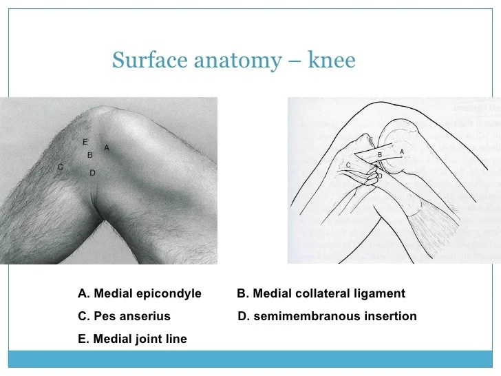 Peroneal Nerve In The Back Of Knee
