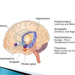 Reticular Formation Diagram Cat5 Network Cable Wiring Diagrams Limbic System And Psychiatric Disorders Basal Ganglia Pons