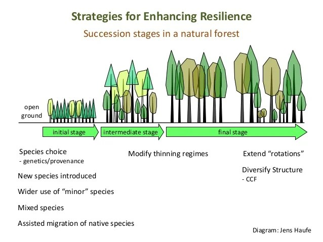Silviculture the application of various treatments such as; Silviculture And Management Of Ash Best Practice Advice For Woodland