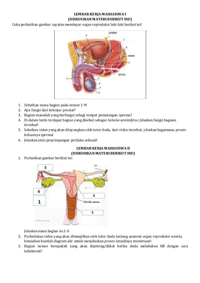 Sebutkan Fungsi Dari Sistem Reproduksi : sebutkan, fungsi, sistem, reproduksi, Modul