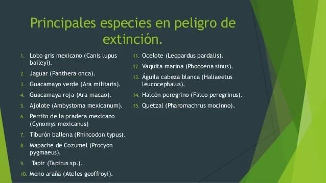 En Cuales En Mexico Los Animales De Son Peligro Extincion