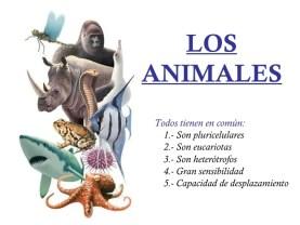 los animales vertebrados 1 728 - Animales Vertebrados Definición