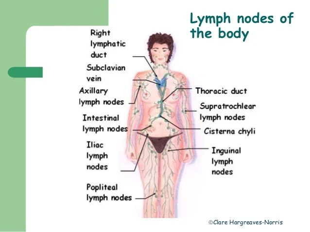 location of lymph nodes in armpit diagram 1978 vw bus wiring lymphatic system
