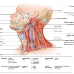 Diagram Lymph Nodes On Back Of Head Soft Starter Wiring Schneider All Data Lymphatic And Neck Picture
