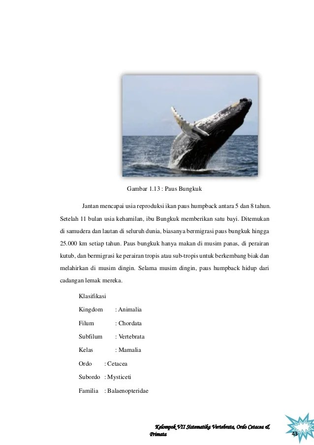 Perkembangbiakan Ikan Paus : perkembangbiakan, Makalah, Sisver, Revisi