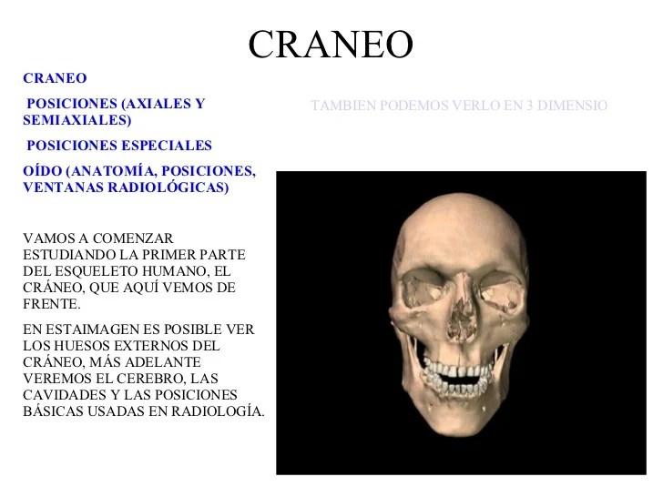 Manualrx02 Craneo