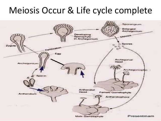 diagram of learning cycle 2009 yamaha raptor 700 wiring marchantia life