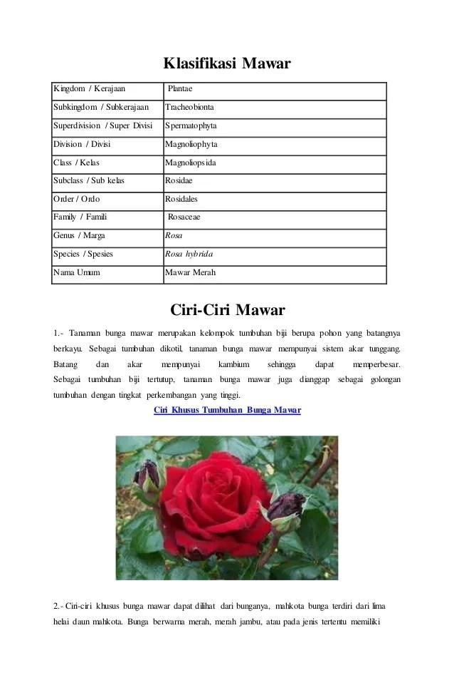 Contoh Report Text Tentang Bunga Mawar Barisan Contoh Cute766