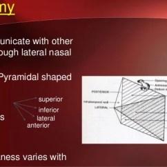 Ar 15 Lower Diagram Usb To Serial Port Wiring Maxillary Sinus