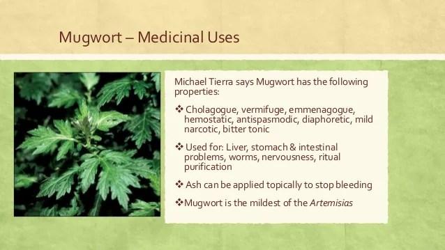 Medicinal Species of the Genus Artemisia