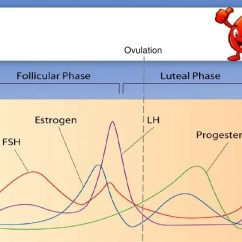Menstrual Cycle Diagram With Ovulation Mercury Optimax Wiring Luteal Menstruation Hormones Raise And Fall 5