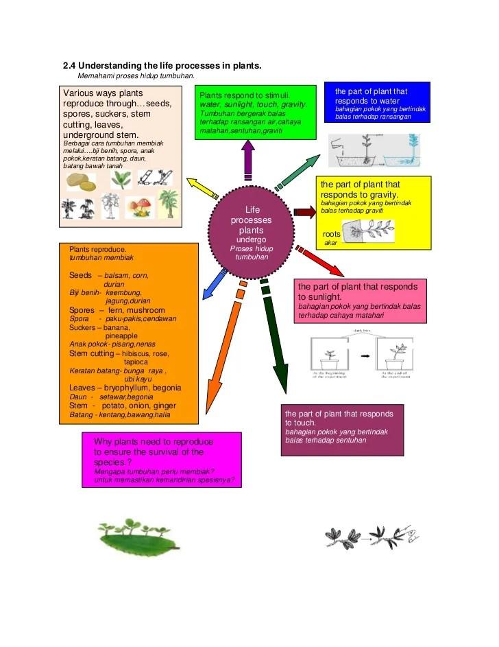 Manfaat Peta Minda : manfaat, minda, Minda, Lebih, Mudah, Faham..,