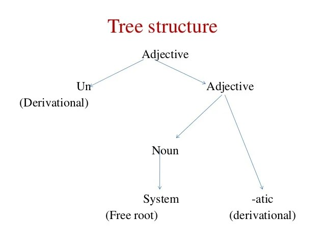 morphology tree diagram ls1 wiring for conversion a brief introduction of structureadjectiveun