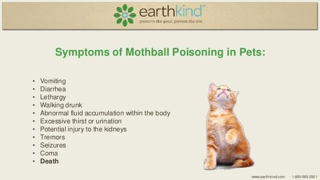 Mothball Poisoning in Pets - Learn the Signs