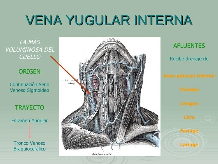 Msculos nervios y arterias faciales