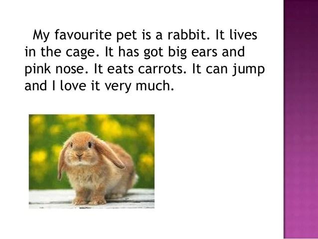 my favorite animal essay