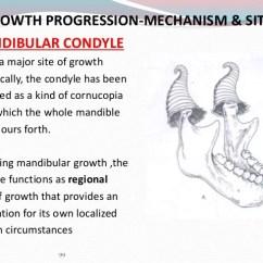 Human Mandible Diagram 2003 Mitsubishi Outlander Engine Growth And Development Of 37