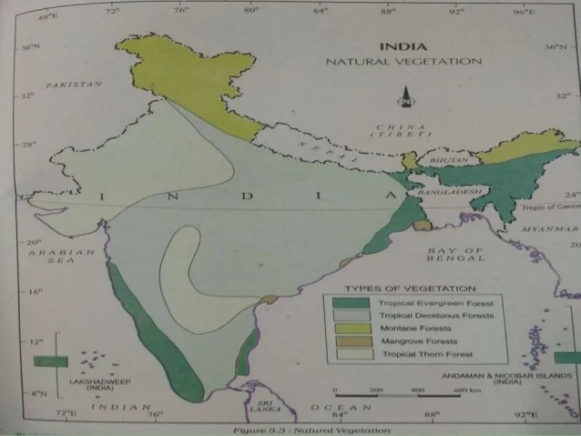 From outside india are termed as exotic plants. Natural Vegetation And Wildlife 11 Class Geography