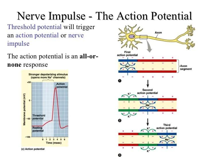 Nerve power point