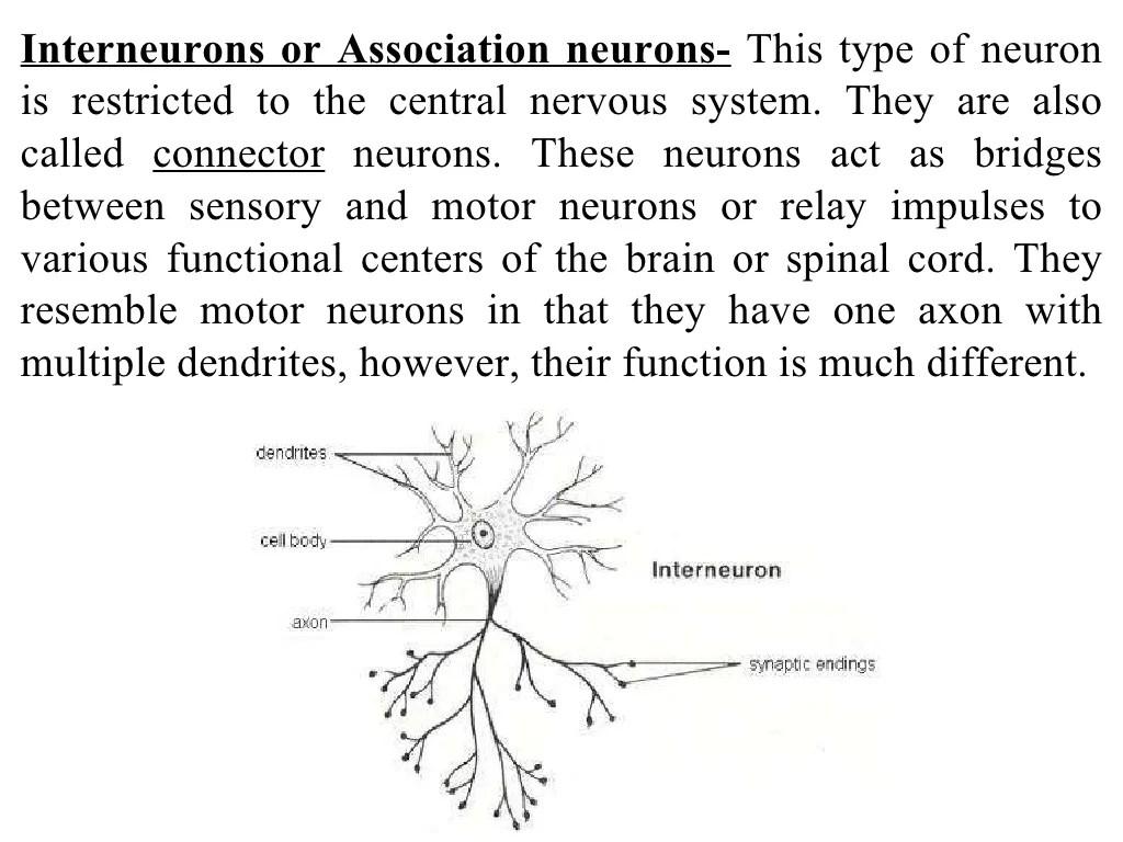 basic neuron diagram air compressor capacitor wiring neurons