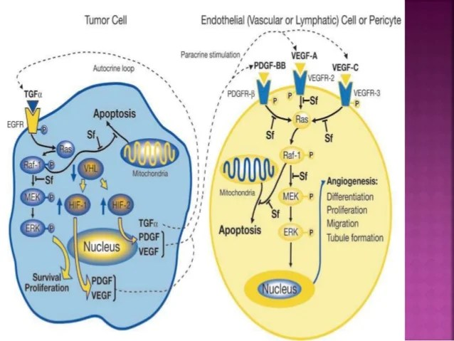 Acts Protein Kinases Tyrosine And Kinase Receptor Through