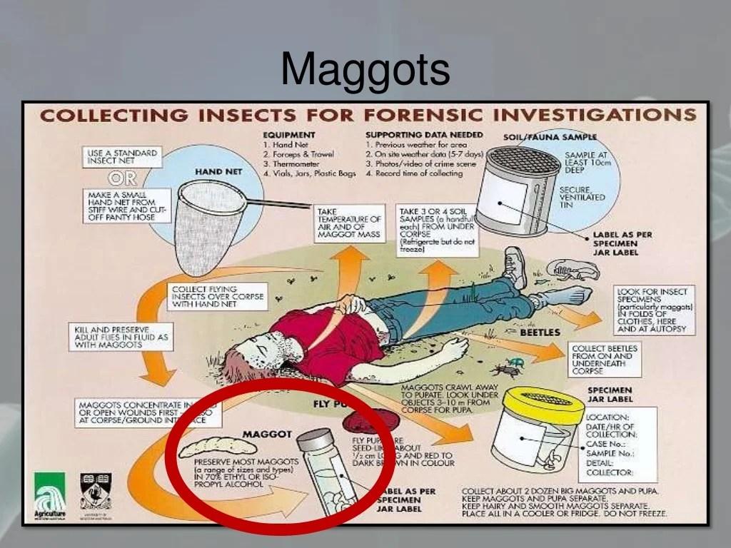 Forensic Sciences Dna Fingerprinting Str Typing