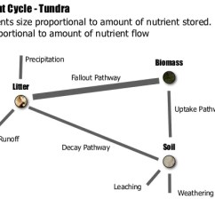 The Carbon Cycle Diagram Gcse Fetal Pig Heart Labeled Ib Geography > Ecosystems Nutrient Cycling