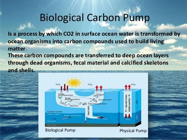 Ocean Biological Pump