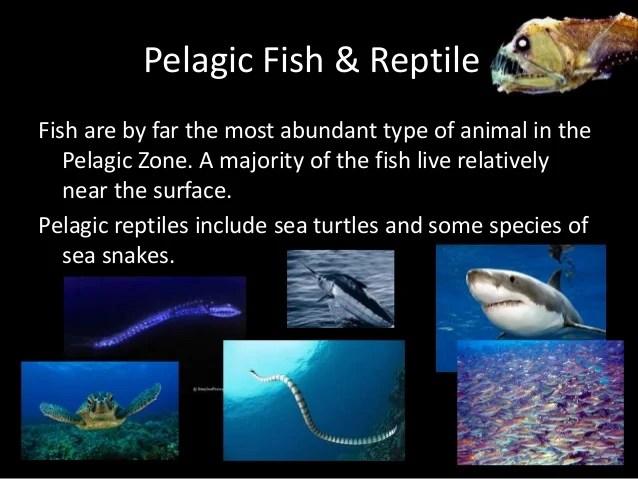 Jellyfish Names Types